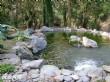 扇平森林生態科學園