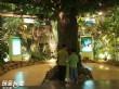 玉山國家公園梅山遊客中心