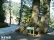 檜谷霧林區