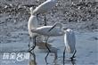 五十二甲賞鳥區