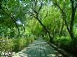 鳥松溼地公園