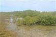 青螺沙嘴濕地