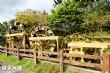 雙溪荷花園