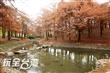 羅東運動公園落羽松森林
