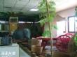 鹿谷鄉農會茶業文化館