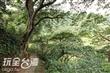 平菁街竹林步道
