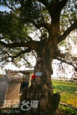 三春老樹休閒農場