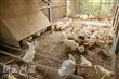 桂園自然生態農場(桂園畜牧場)
