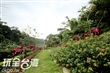 應化大排生態園區