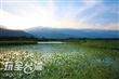 鹿野新良人工濕地