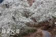 烏松崙石龜梅園