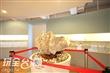 旗津貝殼館