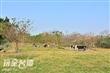 東海大學實習農牧場(東海牧場)