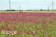 嘉義太保有機稻米專區