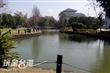 文化中心旁杉池