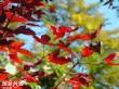 玉山國家公園界碑