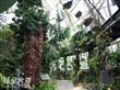 嘉大植物園