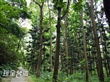 嘉義樹木園
