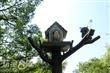 奧爾(Owl) 森林學堂