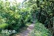 臥龍坡步道