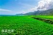 新社海稻田