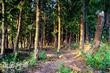 九天黑森林