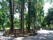 臺灣大學實驗林管理處(下坪熱帶植物園)