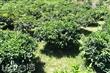 崩山湖果園