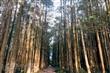 埔里黑森林