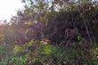 城西防風林
