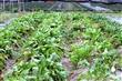 溝貝親子休閒農莊