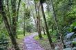鳩之澤自然步道