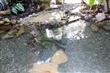 新竹昆蟲館