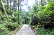 竹子湖黑森林