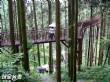 溪頭自然教育園區(溪頭森林遊樂區)