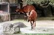 台北動物園(木柵動物園)