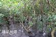 挖子尾自然保留區