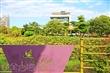 北成庄荷花形象館