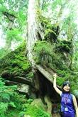 中國歷代神木園區