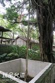 綠色環境學習營地