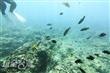 海底動物園(已歇業)