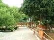 五福臨門神木